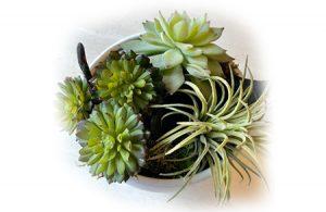 mini-plante
